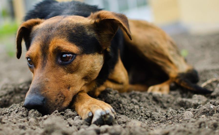 养流浪犬之前需要注意什么